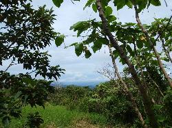 La Reserva Forest Reserve