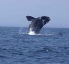 Dockside Whale Watching & Charters