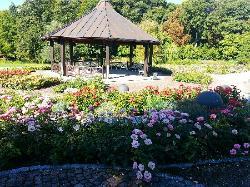 Botanischer Garten - Japan Garten