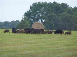 MY Ranch Hunting Preserve