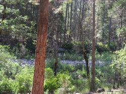 View across creek