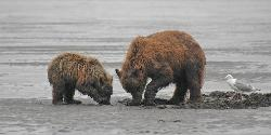 Kodiak Island Van Tours -  Day Tours