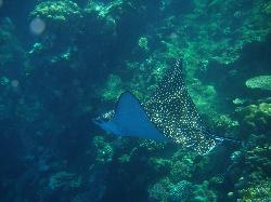 Freedive Tenerife