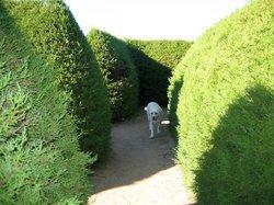 Avenel Maze