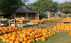Walden Pumpkin Farm