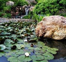 Quarryhill Botanical Garden