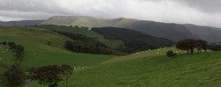 Falconry Experience Wales