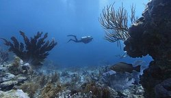 Bonaire East Coast Diving