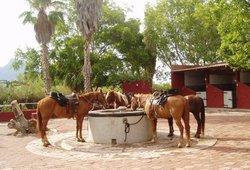 El Rancho Del Desierto