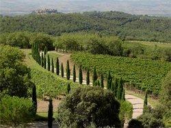 Poggio Antico Vineyards