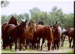 Kentucky Ranch