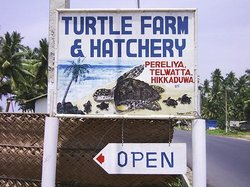 ‪Turtle Hatchery Hikkaduwa‬