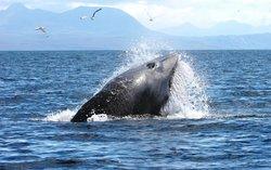 Hebridean Whale Cruises
