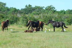 Corolla Wild Horse Fund Museum and Stpre