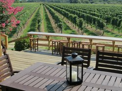Corey Creek Vineyards