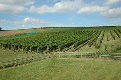 Pebblebed Vineyard