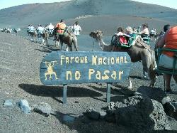 Timanfaya mountain camel ride