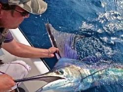 Sportfish Vanuatu