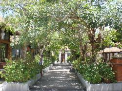 tree canopy thru pavilions