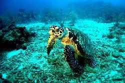 Anbadlola Guadeloupe-Plongee