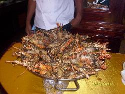 langoustes très frîches et poissons