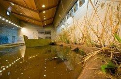 Musée de l'Environnement de Stymphalia