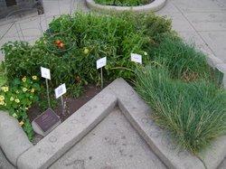 4-H Children's Garden