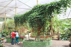 Mariposas de Mindo - Butterfly Garden