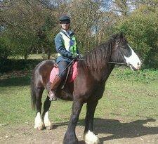 Allendale Equestrian Centre