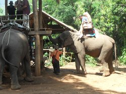 All Chiang Mai Tours
