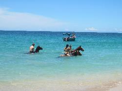 Caribe Horse Riding Club Day Tours