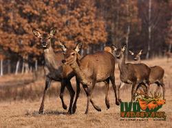 Ivo Wildlife Park