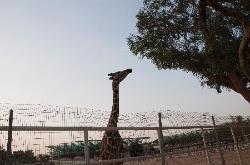 Doha Zoo
