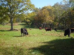 Sasagamine Farm