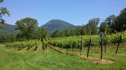 Yonah Mountain Vineyards