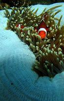Nautilus Diving Bali