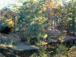 Beans Creek Ranch