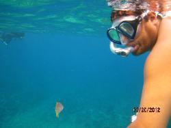 Great snorkelling