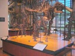 Amherst College Museum of Natural History