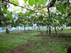 Yamazaki Farm