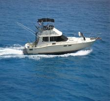 Hibob Fishing Charters