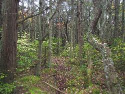 White Cedar Swamp