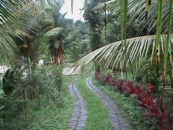 Walking in Paradise