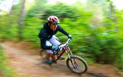 Mountain Bike Rotorua- Day Tours