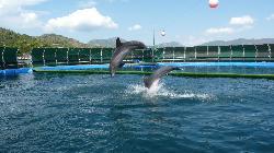 Dolphinarium-Aquapark marmaris
