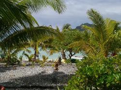 Le jardin entre la pension et la plage coté lagon