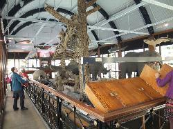 Natural History Museum at Tring
