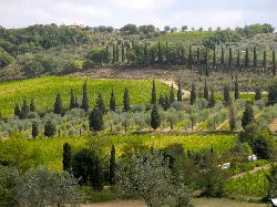 Tuscan Vineyard Tours