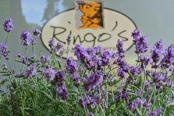 Ringo's