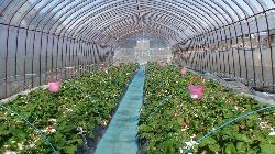 Harada Farm
